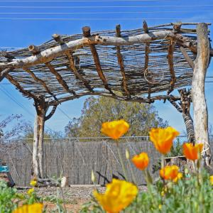 Structural mesquite timbers and ocotillo bough lattice blend in with the landscape to create a pleasant shaded area.